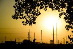 工厂设备在日落和白杨树背景中分支 在拒绝有效海洋日落黄色之上 库存照片