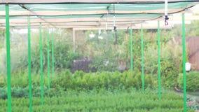 工厂设备耕种使用自动灌溉 幼木树和针叶树的生产 股票录像