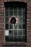 工厂风扇老视窗 库存图片