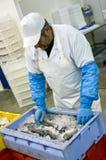 工厂食物工作者 免版税图库摄影