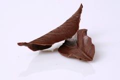 巧克力叶子 免版税库存照片