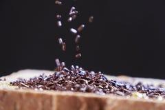 巧克力在切的面包洒 免版税库存照片