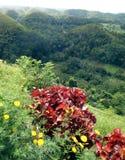 巧克力小山,保和省 菲律宾 免版税库存照片
