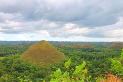 巧克力小山bohol海岛菲律宾 图库摄影