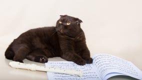 巧克力猫 免版税库存照片
