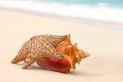 巧克力精炼机壳和海星在海滩。 库存图片