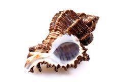 巧克力精炼机海运白色 免版税库存图片