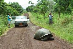 巨人加拉帕戈斯草龟在圣克鲁斯岛 免版税库存照片