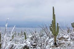 巨人柱国家公园冬天雪 库存图片