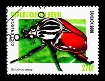 巨人甲虫(Goliathus druryii),甲虫serie,大约2000年 库存照片