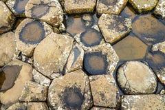 巨人的堤道的玄武岩铺磁砖的海滨 免版税库存图片