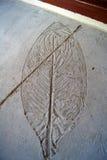 巨型卵形植物叶子的僵化的版本记录在水泥地板的在旅馆阳台上,发埃发埃,泰国 库存照片