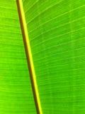 巨型叶子 免版税库存图片