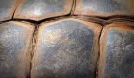 巨型壳草龟 免版税库存图片