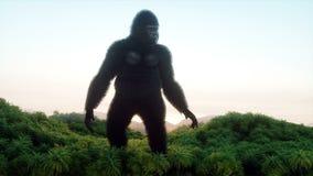 巨型大猩猩和直升机在密林 史前动物和妖怪 现实毛皮和动画 4K回报 库存例证