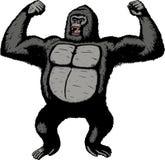 巨型大猩猩 库存照片