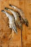 巨型大虾原始的虾老虎 免版税库存照片