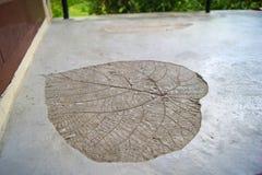 巨型心形的植物叶子的僵化的版本记录在水泥地板的在旅馆阳台上,发埃发埃海岛,泰国 图库摄影