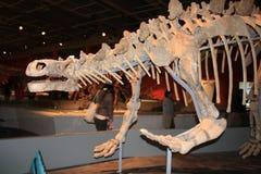 巨型恐龙陈列的香港传奇 库存图片