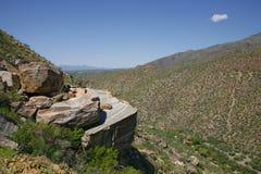 巨型柱仙人掌仙人掌,萨格鲁国家公园 图库摄影