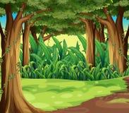 巨型树在森林里 库存例证