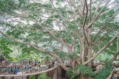 巨型树,大树在清迈,泰国,著名attracti 库存照片