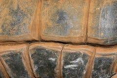 巨型模式壳草龟 库存照片