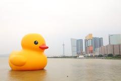 巨型橡胶鸭子访问澳门 库存照片