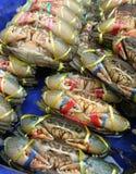 巨型泥螃蟹在泰国的新鲜市场上 库存图片