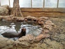 巨型海狼在池塘 免版税库存照片