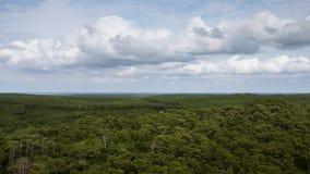 巨型的森林 免版税库存照片