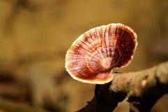 巨型的真菌 库存照片