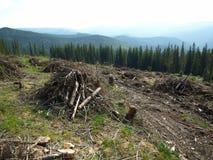 巨型的砍伐森林 免版税库存图片