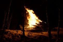 巨型的篝火在冬天夜桦树森林里 库存图片