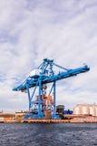 巨型的蓝色cranee 免版税库存图片