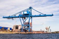 巨型的蓝色cranee 库存照片