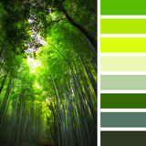 巨型竹子调色板 库存图片