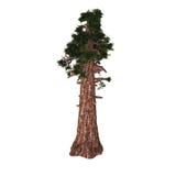 巨型红木结构树 向量例证