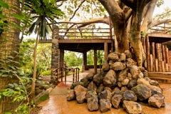 巨型结构树在庭院里 库存照片