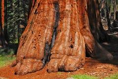 巨型结构树 库存图片