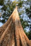 巨型结构树 库存照片