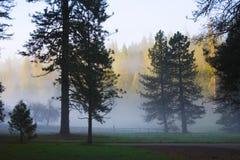 巨型美国加州红杉优胜美地 免版税图库摄影
