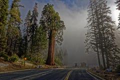 巨型美国加州红杉在优胜美地国家公园 免版税库存图片