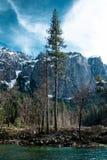 巨型美国加州红杉在尤塞米提谷 库存照片