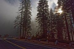 巨型美国加州红杉树在优胜美地国家公园 免版税库存照片