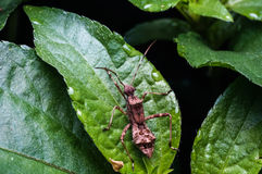 巨型蚂蚁 库存图片