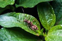 巨型蚂蚁 免版税库存照片