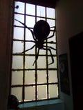 巨型蜘蛛黑色1 库存照片