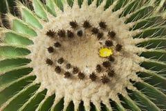 巨型仙人掌在Nong Nooch植物园里,芭达亚,泰国 库存照片