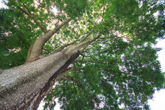 巨型结构树 图库摄影
